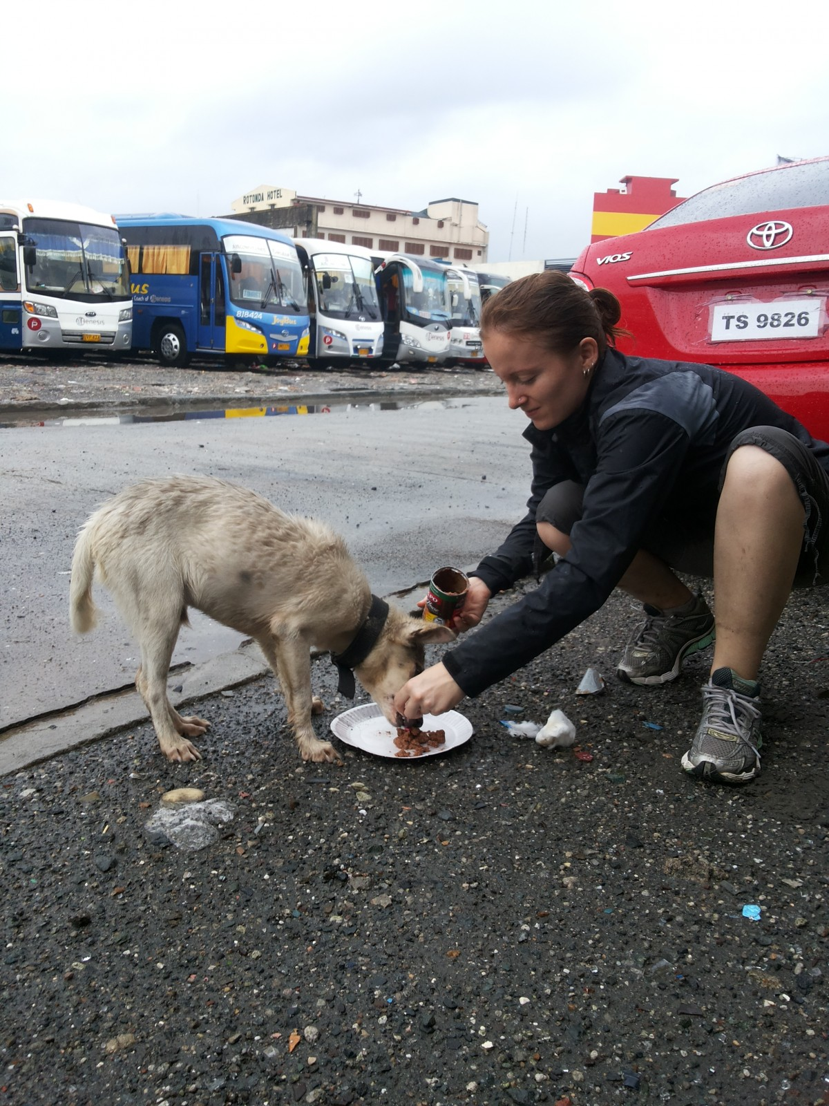 Dog in Philippines floods