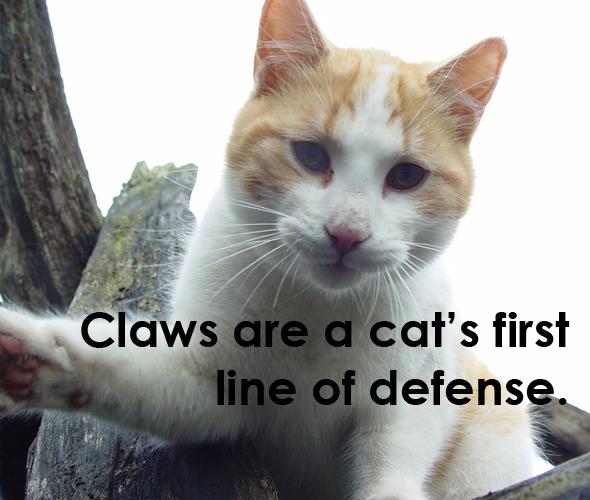 declawing defense