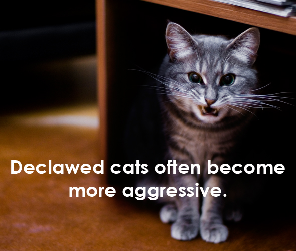 declawing aggressive