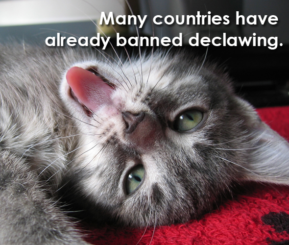 declawing ban