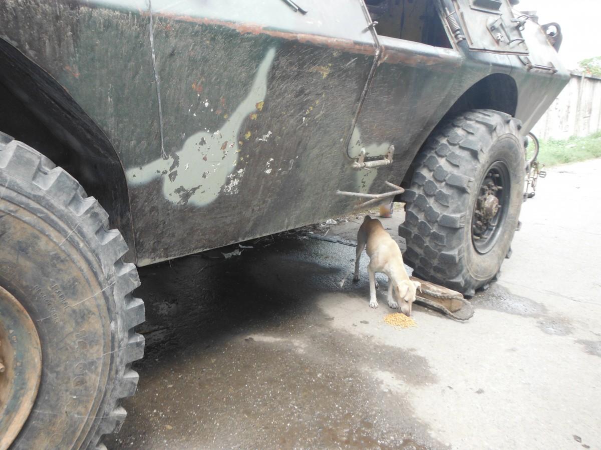 Zamboanga Crisis animal rescue
