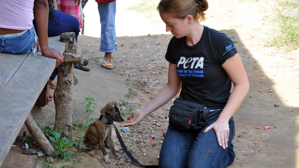 A puppy with diarrhea and mange gets medicine from PETA. Photo credit: Mihai Vasile / Four Paws