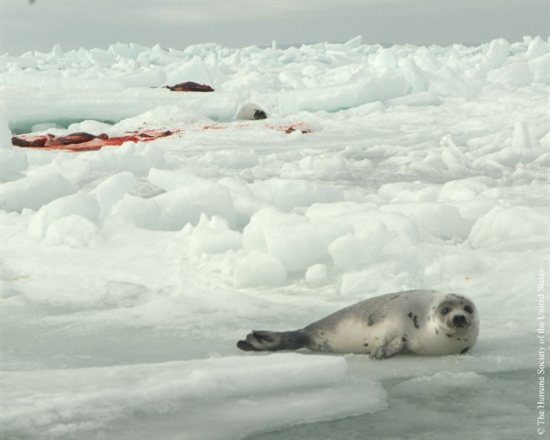 Can Seal Photo 13