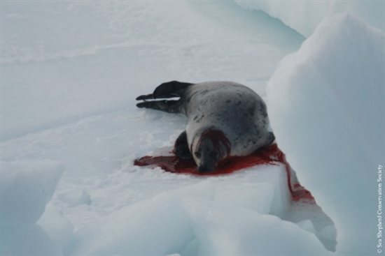 Can Seal Photo 4