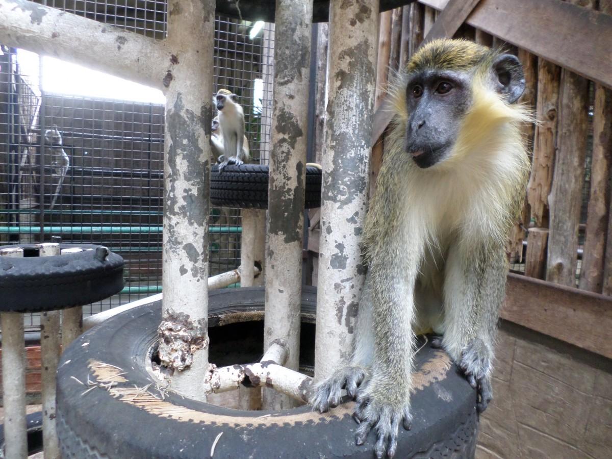 monkey at pata zoo