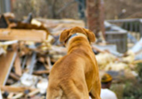 Make Plans Now to Protect Animals in Future Emergencies