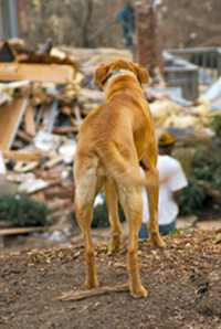 If disaster strikes, don't leave companion animals behind