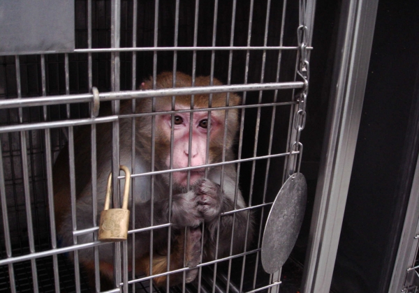 Monkey in Cage (Air France)