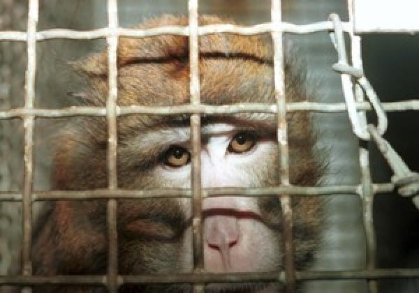 Tell Laos to Close Down Cruel Monkey Farms!
