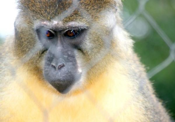 Surabaya Zoo