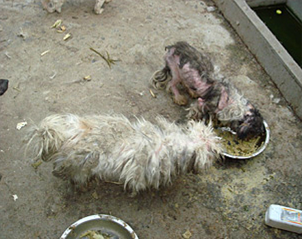 A dog with a severe skin infection languishes in an animal shelter in Nanjing, China.