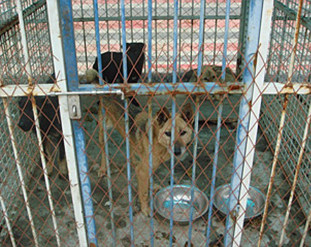 Kennels at this animal shelter in Nanjing were filthy and severely crowded.