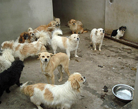 A government-run animal shelter in Nanjing, China, was filthy and severely crowded.