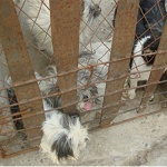 Cages were not designed properly for some dogs, and smaller animals were unable to free themselves