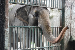 Mali-Manilla-Zoo