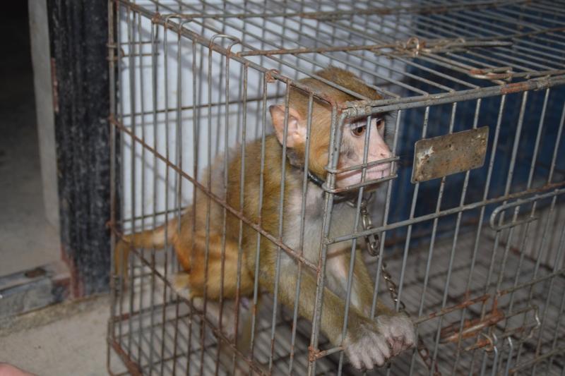 Circus_China_caged_primate_DSC_0036
