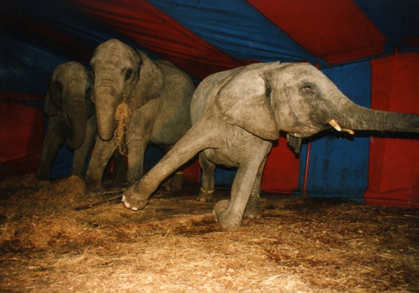 Circus_Featured_Image_elephant_entertainment_misc_circus001
