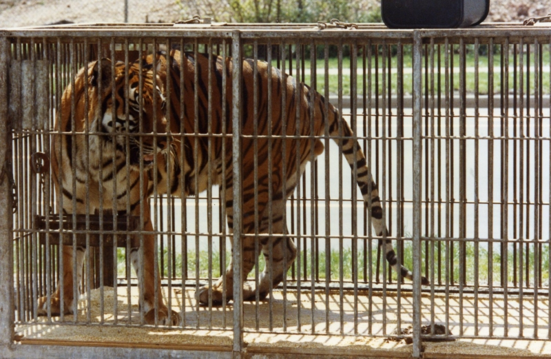 caged or free should animals be kept in zoos