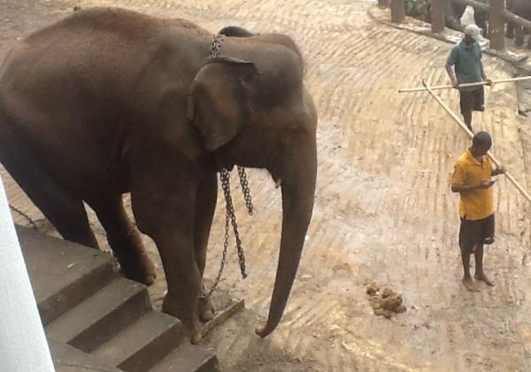 ElephantTinaFerrera