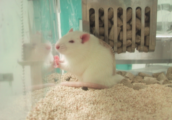 Food Companies Kill Animals in Taiwanese Labs for Health