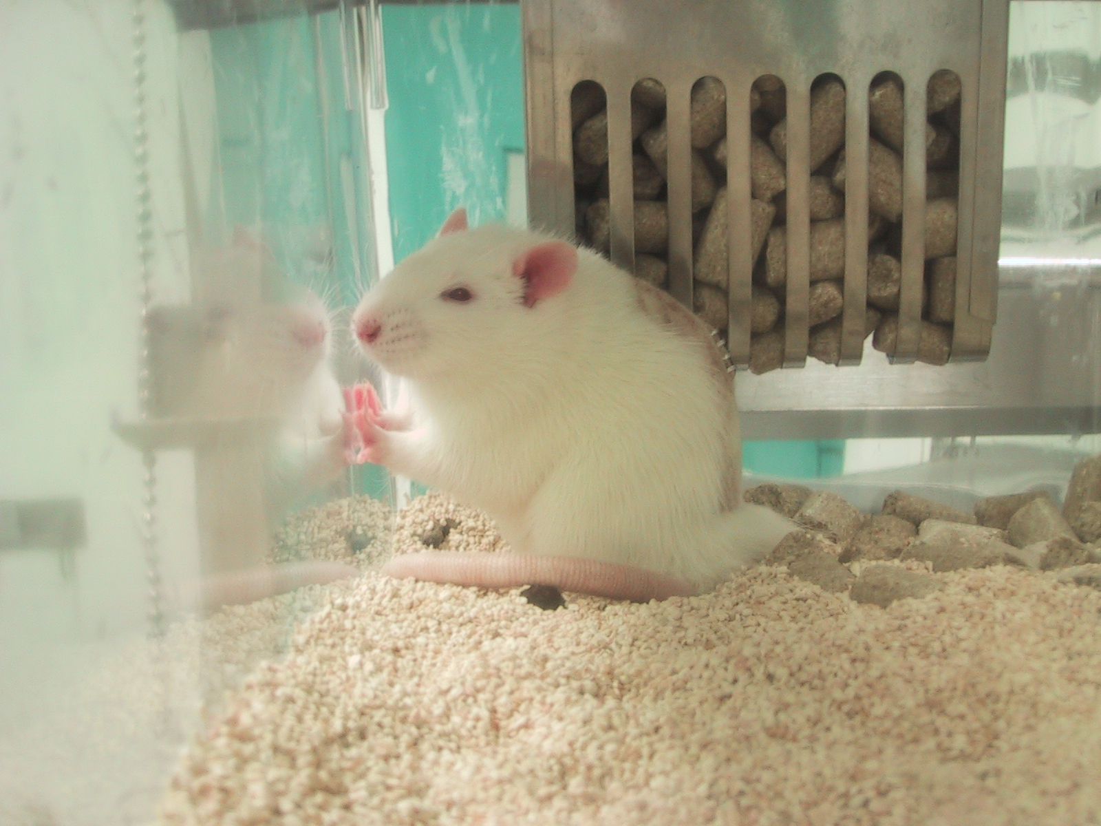 Victory! Nine Japan-Based Companies End Tests on Animals