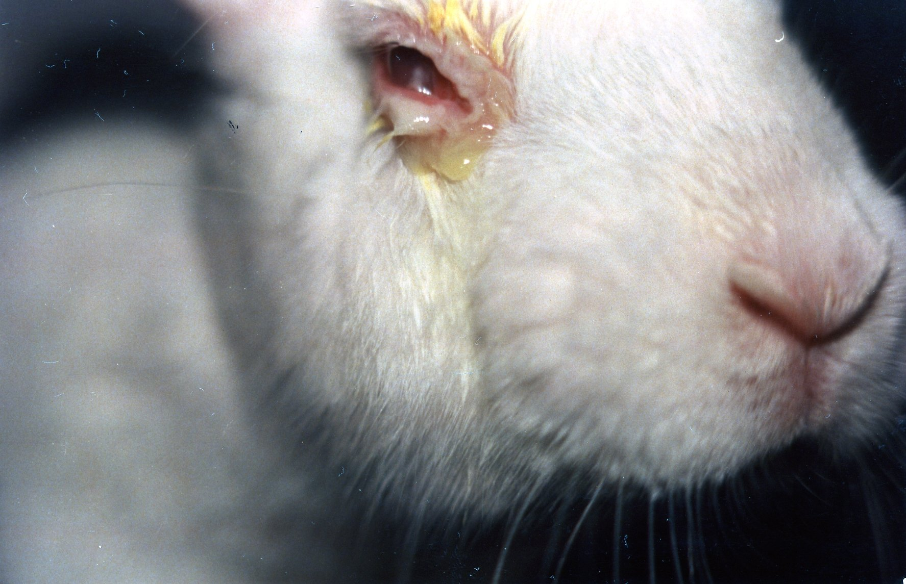 Toxic and Tragic Testing on Animals   Animals Used for ...
