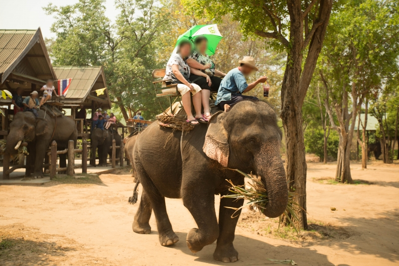 Tourists take a ride on an elephant in Thailand.