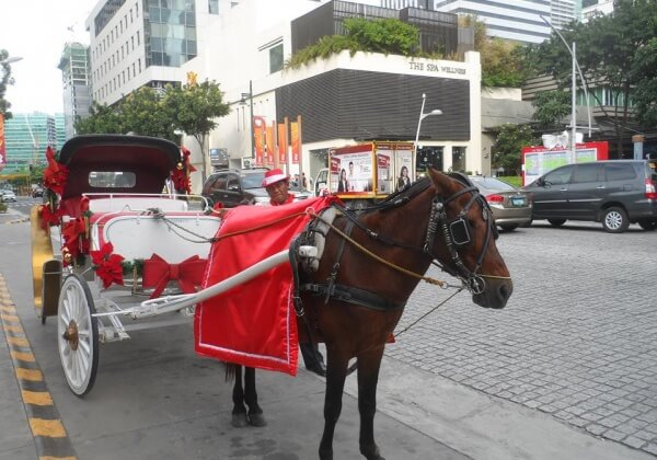 URGE BGC TO PUT A STOP TO HORSE-DRAWN CARRIAGES!