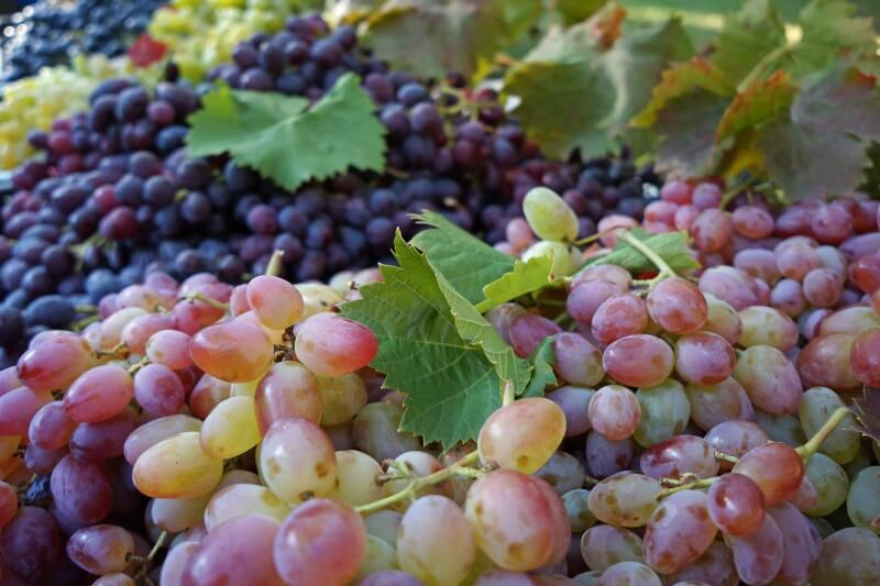 grape-990068