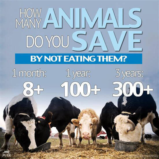 PETA-US-How-Many-Animals-Have-You-Saved