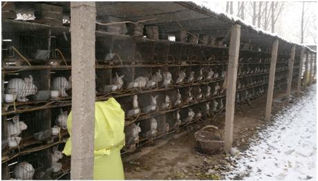 Chinese Fur Trade 5