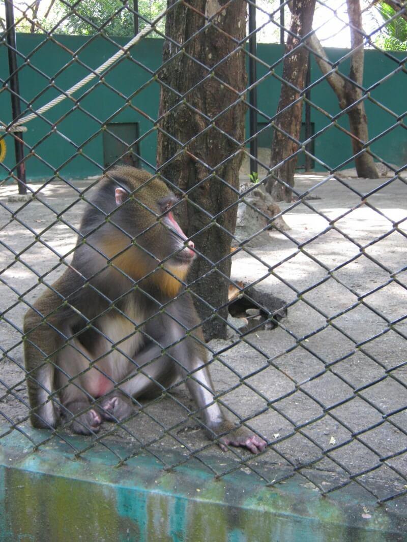 Safari-World-October-26-2011-11