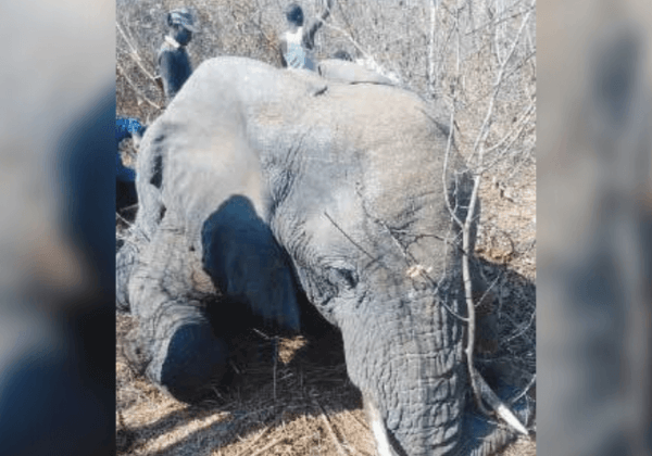 Elephant Shot Dead After Getting Spooked by a Selfie-Taking Man