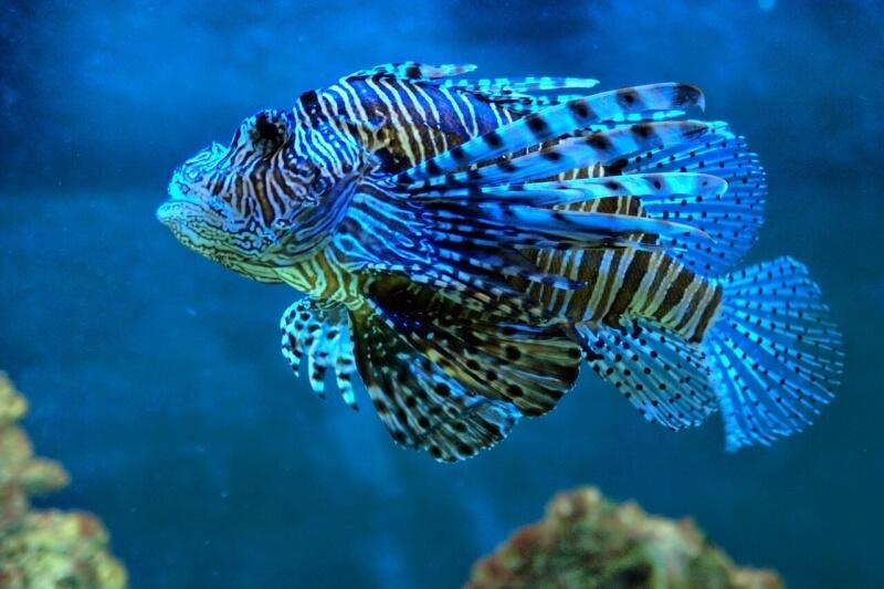 fish-1178378_1280