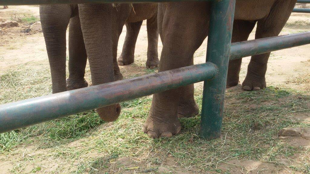 No more chains for Sunder.