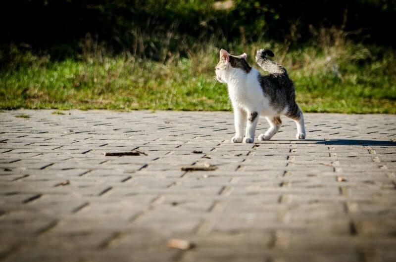 cat-256192_1920 (1)