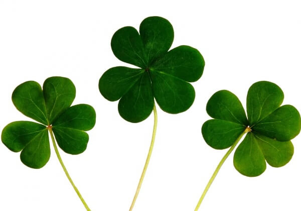 Five Ways to Go Green on St. Patrick's Day