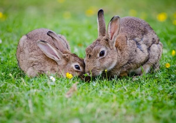5 Easy Ways to Take Action for Rabbits