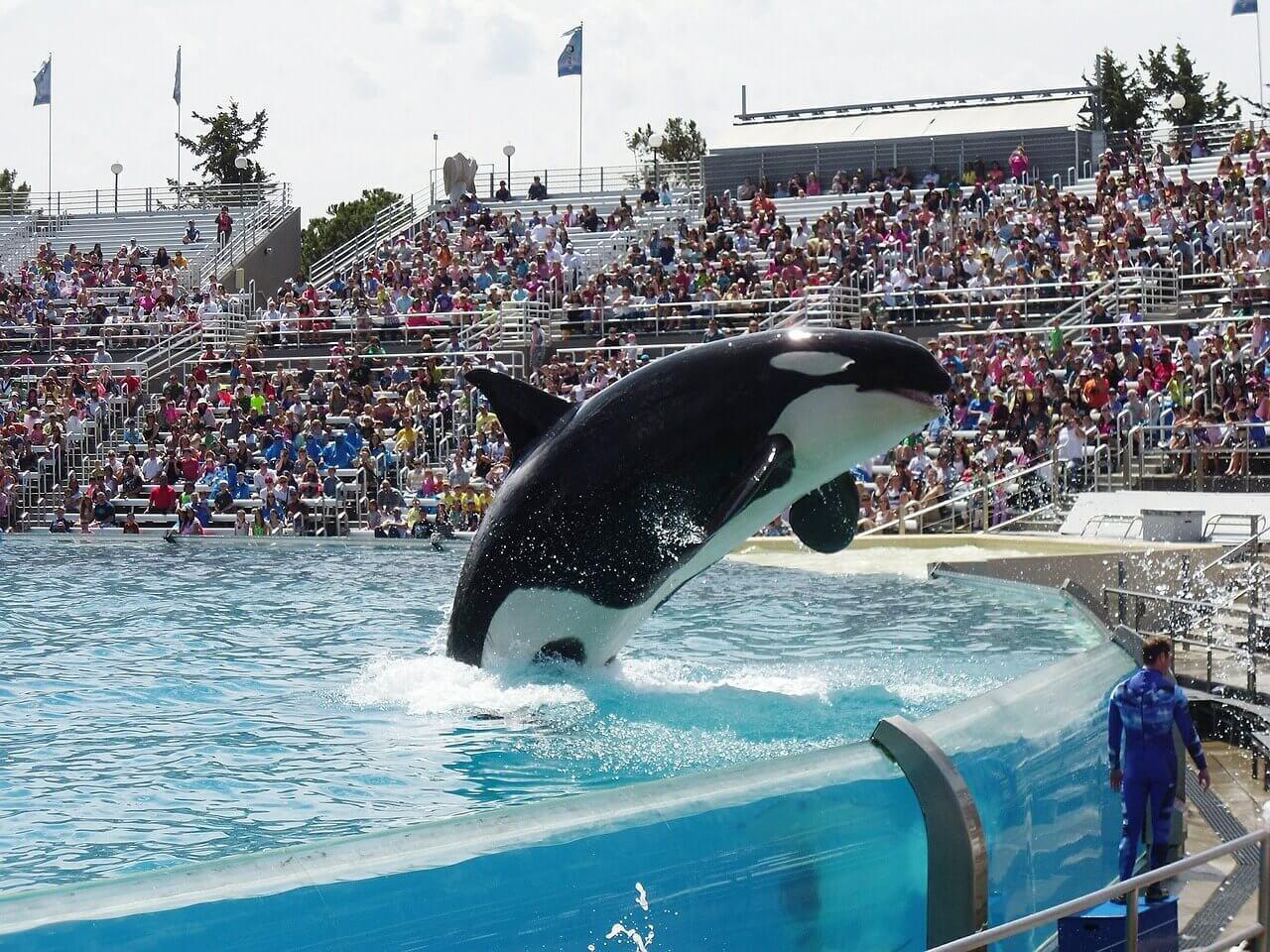 orca-523067_1280 (1)