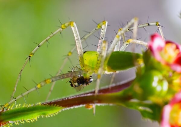 7 Reasons Spider's Aren't That Scary
