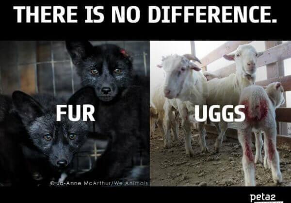 uggs-vs-fur-image