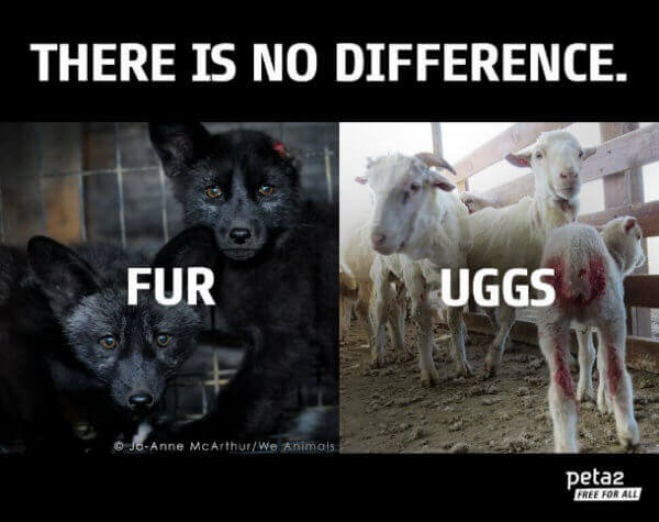 uggs-vs-fur-image