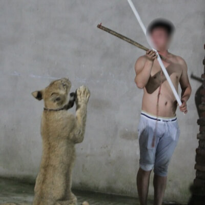 Chinese Circus Industry-21