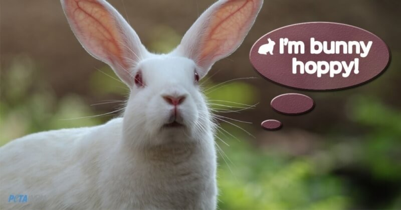 bunny-images-for-repeat-animal-tests-ban-image-2-1024x538