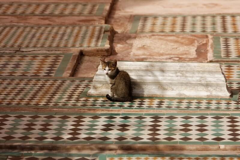 cat-616852_1920