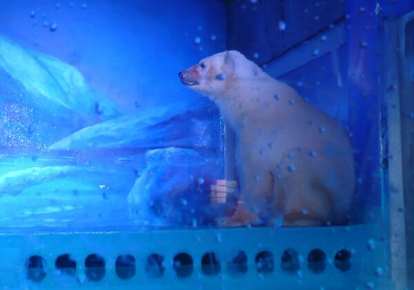 Help Release Polar Bears, Penguins and Whales from the Saddest Zoo in the World