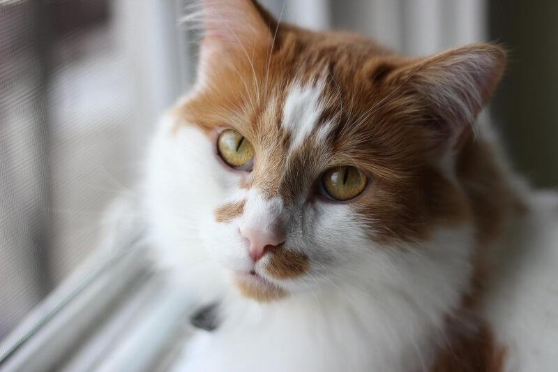 cat-1404517_1920