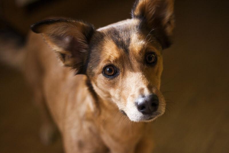 dog-1382413_1920