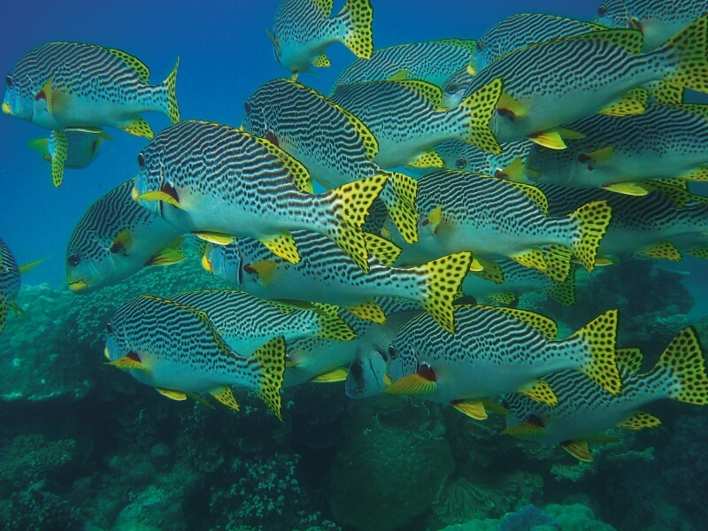 fish-swarm-432821_1920