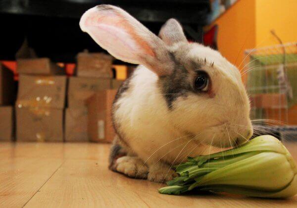 Tofu rabbit, June 26, 2015 (118)
